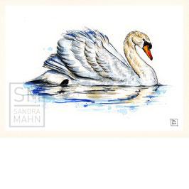 SCHWAN | swan | A4