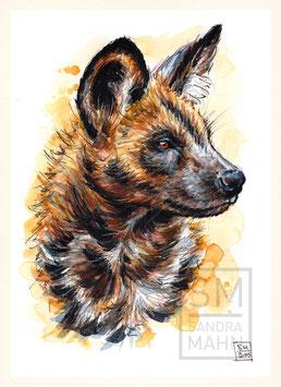 WILDHUND | wild dog | A5