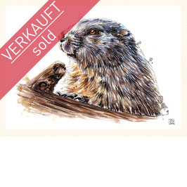 MURMELTIER | marmot | A4