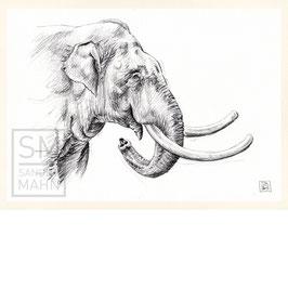 ELEFANT | elephant | A4
