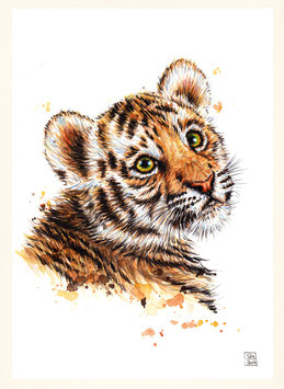 TIGER | tiger | A4