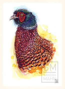 FASAN | pheasant | A4