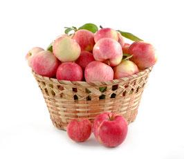Frische Futteräpfel