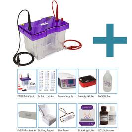 Mini-PAGE und Western Blotting Kit mit Reagenzien