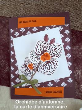 Orchidée d'automne