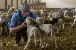 Rencontre du mouton, de la toison à la pelote