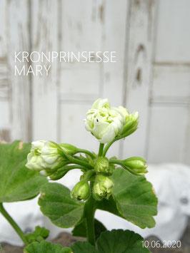 Kronprinsesse MARY - verfügbar