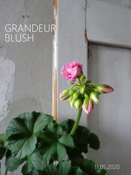 GRANDEUR BLUSH