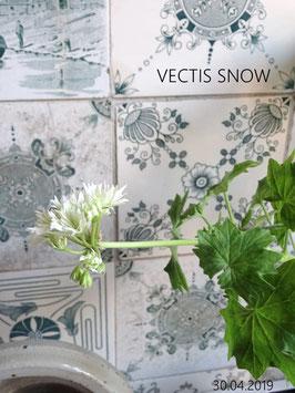 VECTIS SNOW