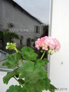 ANNA-SOFIE