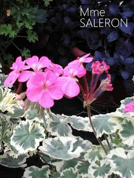 Mme SALERON - verfügbar