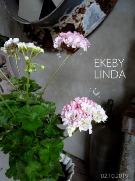 EKEBY LINDA