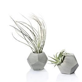 Dodecahedron Geometric Concrete Tillandsia Planter