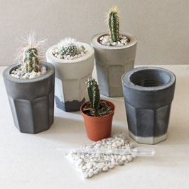 Concrete Planter Cactus Kit, with deco rocks and watering pipette