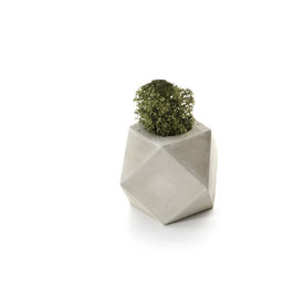 Cuboctahedron Concrete Tillandsia Holder