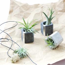Monochrome Concrete Silver Air Plant Holder Cube Set Of 3