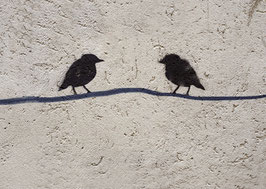 Postkarte: Vögelgespräch