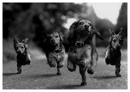 Postkarte: Hundeparade