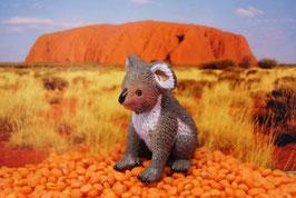 Koala - (deutsch: Koalabär)