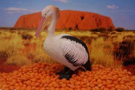 Pelican - (deutsch: Pelikan)