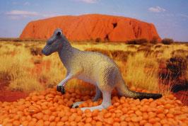 Kangaroo - (deutsch: Känguru)