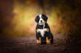Modelcoaching für Hunde (Anfänger)