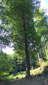 Erhalte-den-Wald-Patenschaft