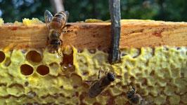Honigpatenschaft