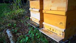 Nachhaltige Bienenpatenschaft