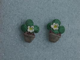 Ohrstecker Kaktus mit weissen Blüten