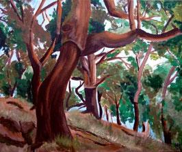 Der Korkeichenwald