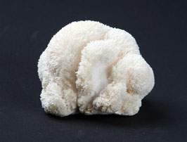 Pom-Pom Blanc