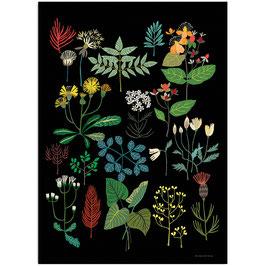 Plant Study Print A3