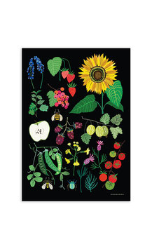 Fruit Garden Study A3 Print