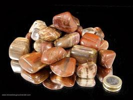versteinertes Holz Trommelsteine 0,5 kg Art.Nr.: 10376