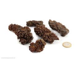 Koprolith - fossile Exkremente 0,5 kg Art.Nr.: 11378