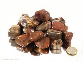 versteinertes Holz Trommelsteine 0,5 kg