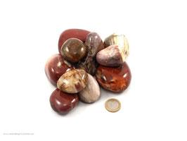 Versteinertes Holz Pebbles /XL Trommelsteine 0,5 kg
