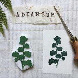 """Tampon fougère """"Adiantum"""" (Adiantum capillus-veneris )"""