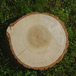Baumscheibe aus Pappel