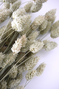 Glanzgräser - Strauß Natur Ganzer Bund Trockenblumen