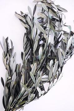 Stabilisierter Olivenzweig Trockenblumen