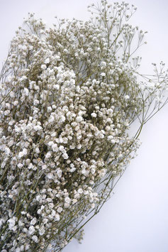 Stabilisiertes Gipskraut Natur Trockenblumen