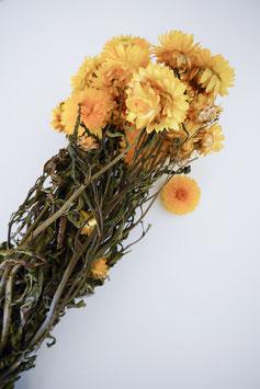 Getrocknete Strohblume Helichysum gelb Trockenblumen