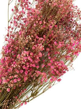 Stabilisiertes Gipskraut Trockenblumen