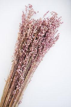 getrocknete Briza salino Natur Trockenblumen