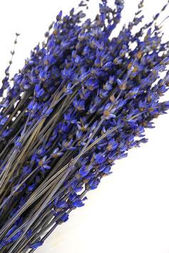 Stabilisierter Lavendel Trockenblumen