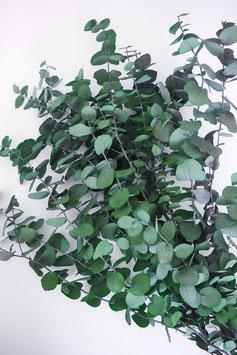 Stabilisierter Eukalyptus Baby Green Trockenblumen