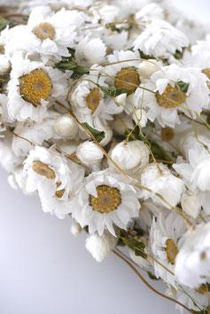 Getrocknete Rodanthe Strauss weiss Trockenblumen