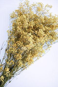 Stabilisiertes Gipskraut Gelb Trockenblumen
